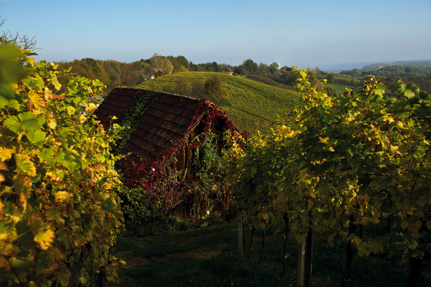 Southern Styria / Vineyards