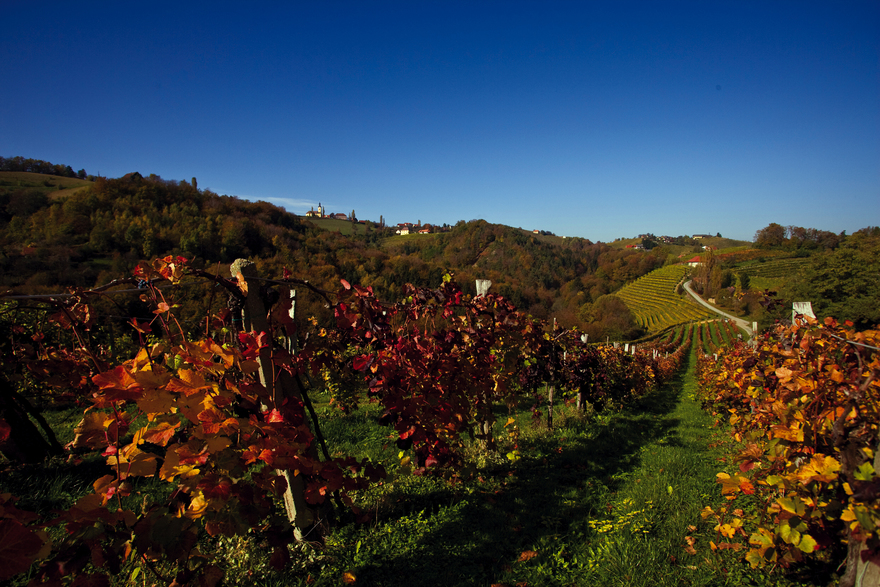Vineyards / Southern Styria
