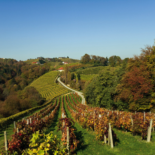 Vineyards in Southern Styria