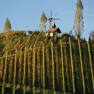 Vineyards in Southern Styria / autumn