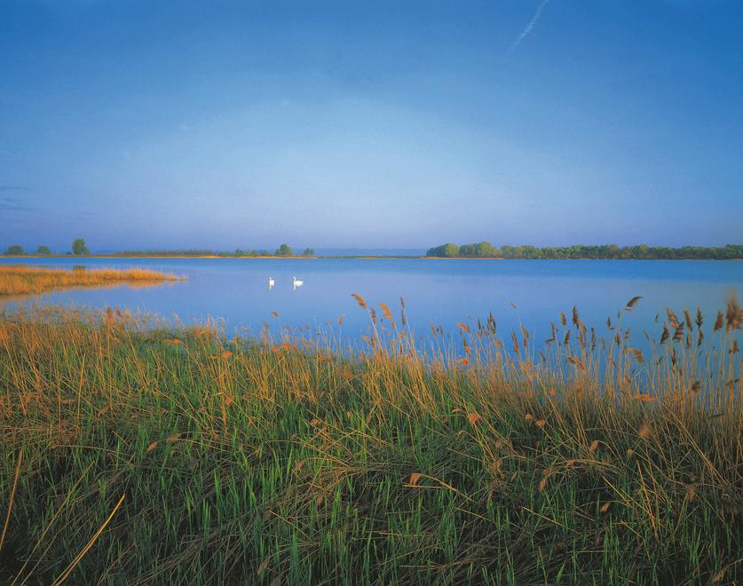 Lange Lacke bei Apetlon im Burgenland / Nationalpark Neusiedler See. © Österreich Werbung, Fotograf: Popp G.