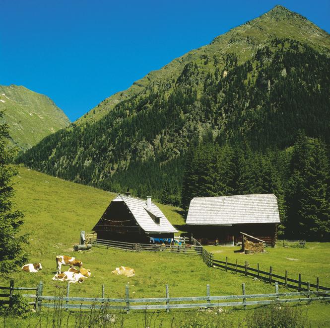 Kühe auf der Almwiese bei Maria Pfarr im Salzburger Land. © Österreich Werbung, Fotograf: Weinhaeupl W.
