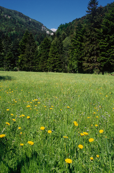 Meadow near Puchberg am Schneeberg / Lower Austria