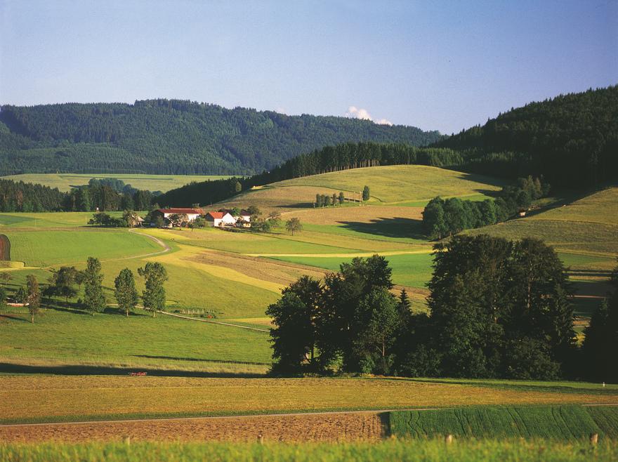Landschaft im Innviertel / bei Neukirchen