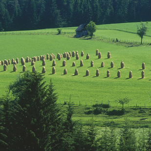 Meadows in Styria Hay harvest