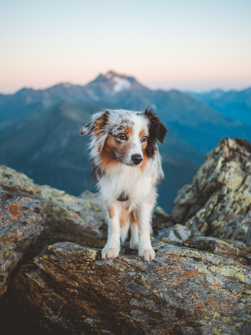 Hiking with dog on Giggler Spitze